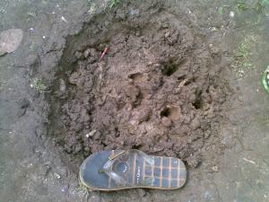 lubang bekas di temukanya ke 5 1/2 pasang sepatu2 itu, hanya kurang lebih berdiameter 40cm kedalaman 7cm.