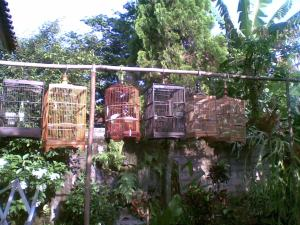menjemur burung di pagi hari